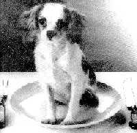 dog on a plate